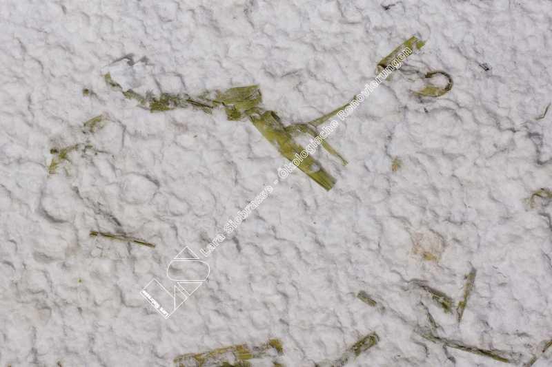 072-lara-siebrasse-baumwollputz